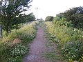 Public footpath from Rainton Meadows - geograph.org.uk - 871336.jpg