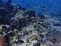 Puerto Galera underwater (6).jpg