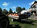 Pumpkin Picking - panoramio.jpg