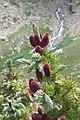 Purple Pinecones^ - panoramio.jpg