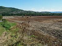 Puy de Mur. vu de Dallet (Auvergne).jpg