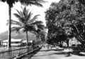 Queensland State Archives 1362 Main Street Palm Island showing mango trees and palms c 1935.png