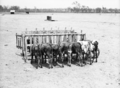 Queensland State Archives 1682 Calf feeding bails Rosevale March 1952.png