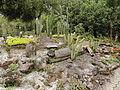 Quitos botaniska trädgård-IMG 8805.JPG