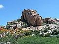 ROCKS AND FLOWERS^KADIRI AP - panoramio.jpg