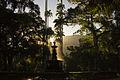 Raios de Sol no Jardim Botânico.jpg
