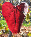 Red leaf heart shaped.jpg