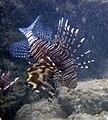 Red sea-reef 3877.jpg