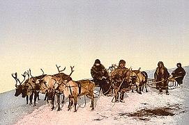 Rentierschlitten in Russland um 1900.jpg