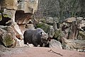 Rhino (6819221412).jpg