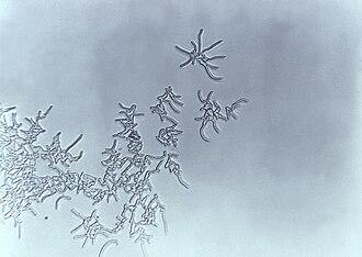 Rhodococcus - Rhodococcus sp.