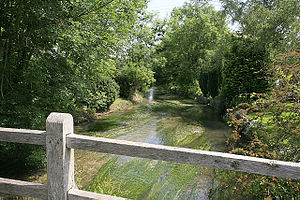 River Ebble - River Ebble at Coombe Bisset
