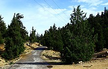 Road in Ziarat Juniper Forest, on way to shrine of Baba Kharwari in Ziarat District.jpg