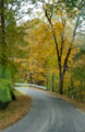Road in the Woods.png