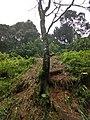 Roadside Landslip Anaimalali Hills IMG 20180822 164907223 HDR.jpg