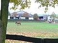 Roemerhof, Steffeln - geo.hlipp.de - 6713.jpg