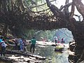 Root-Bridge,Mawllynong.jpg