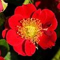 "Rosa ""Eyeopener"" o INTerop. 04.jpg"