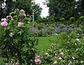Roseninsel Juni 2015.jpg