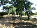 Roseville, CA Walerga Rd. S. of Waterstone - panoramio.jpg