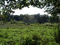 Ruschdahlmoor - 2.jpg