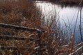Rushes, Wildlife ^ Wetlands Centre, London. - panoramio.jpg
