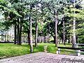 Russian cemetery in Jagodina.jpg
