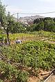 Rutes Històriques a Horta-Guinardó-can travi nou 06.jpg
