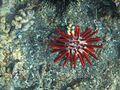 SEA LIFE UNDERWATER MAUI.jpg