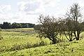 SH FFH-Gebiet Curauer Moor-Weideland.jpg