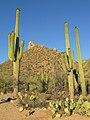 Saguaro National Park (West) 3.jpg