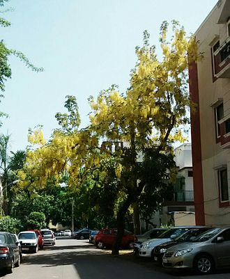 Saket (Delhi) - Road in Saket A Block.