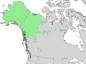 Salix alaxensis range map 3.png