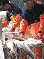 Salmon processing.jpg