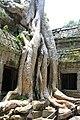 Sangkat Nokor Thum, Krong Siem Reap, Cambodia - panoramio (11).jpg