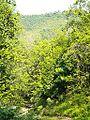 Sanguineta-Paesaggio 14.jpg
