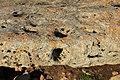 Sassari - Complesso prenuragico di Monte d'Accoddi (31).JPG