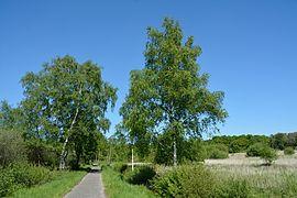 Schleswig-Holstein, Naturschutzgebiet Herrenmoor bei Kleve NIK 5756.JPG