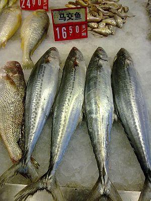 Japanese Spanish mackerel - Japanese Spanish mackerel on sale in Yuhuan, China
