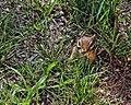 Seney National Wildlife Refuge - Wildlife (9702267657).jpg