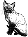 Siamese Cat (PSF).png