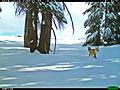Sierra Nevada red fox in Yosemite 2014-12-13.jpg