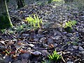 Signs of spring - geograph.org.uk - 312096.jpg