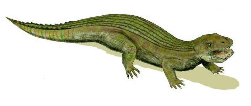 Simosuchus BW