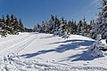 Skiing in Oberhof March 2013-13-Ski track.jpg