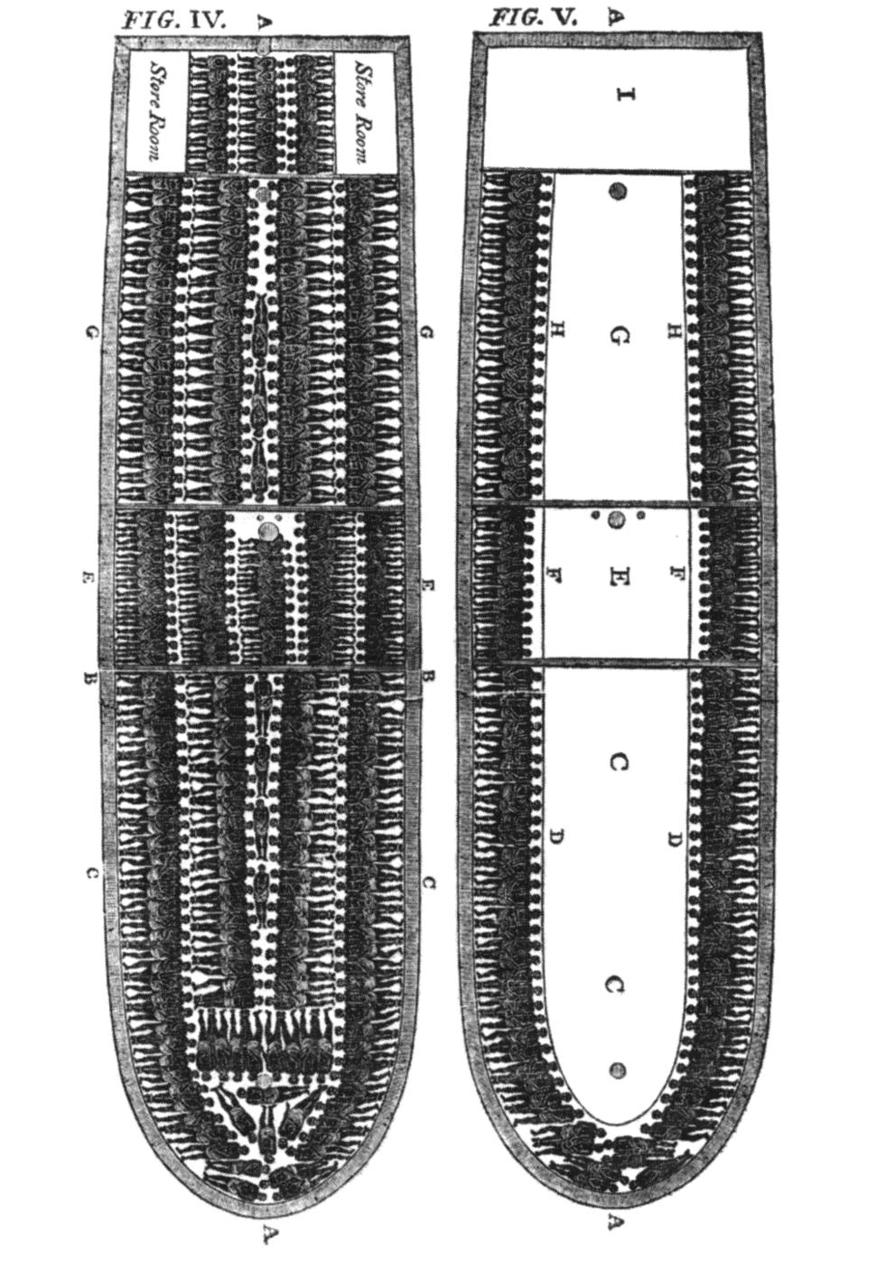 Slave ship diagram