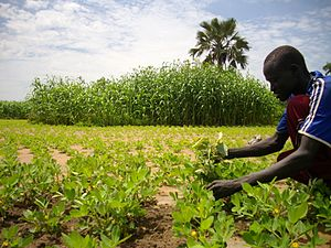 Ethical trade - Oxfam supports small-scale farmers by providing a variety of seeds, tools and equipment to help increase the amount and quality of crops they are able to grow