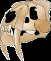 Smilodon skull 2.png