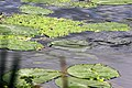 Snake - Harold Country Park (4761219199).jpg
