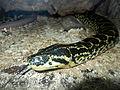 Snakes 11.jpg